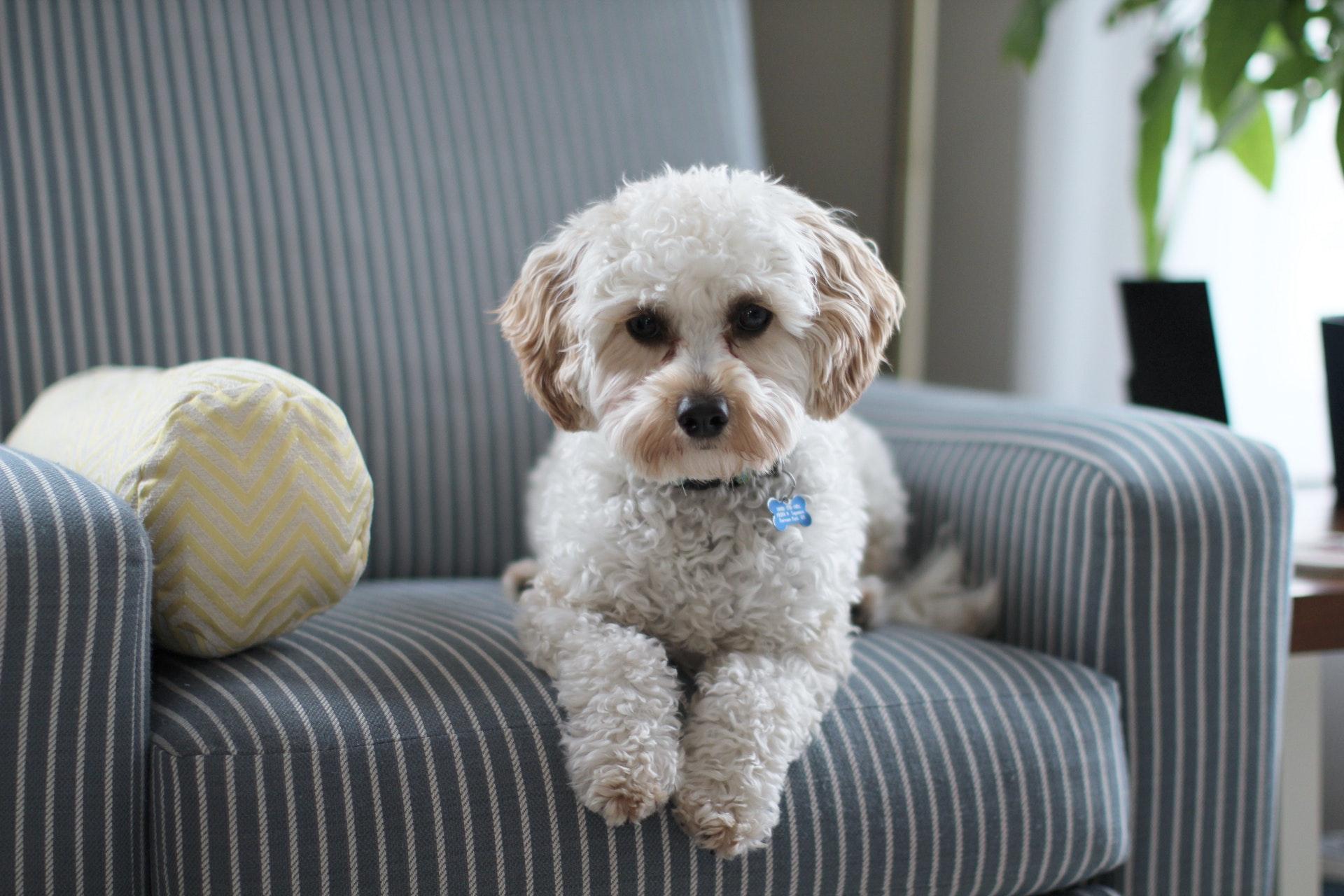Hoy en día hay sistemas de seguridad que evitan las falsas alarmas de las mascotas.